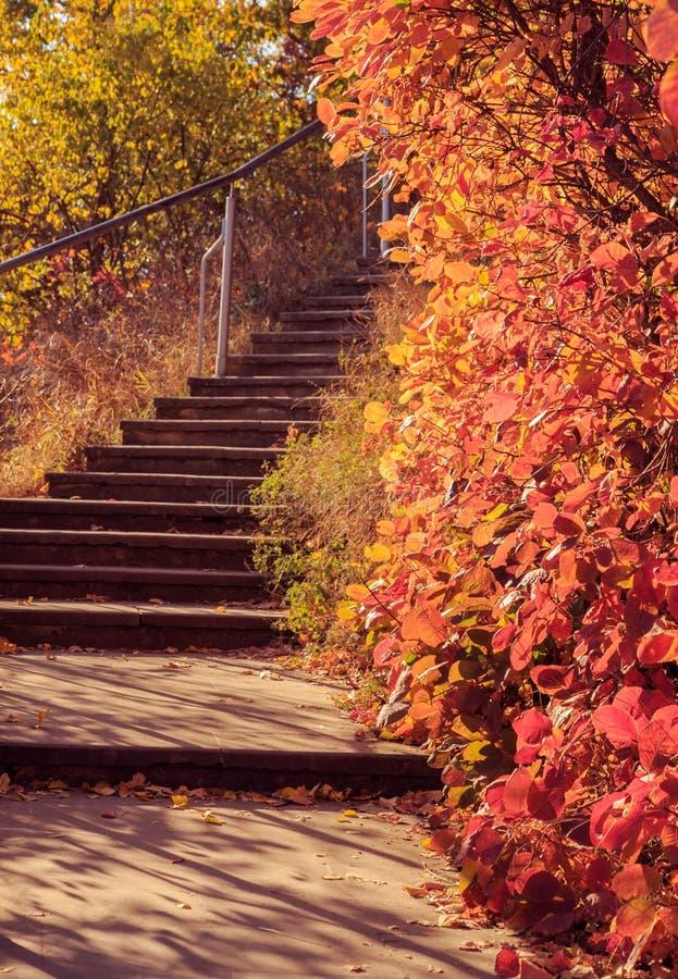 Paisaje pintoresco del otoño con los árboles coloridos fotografía de archivo