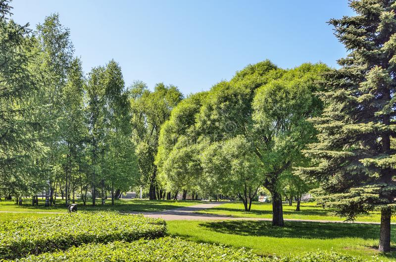 Paisaje pintoresco del parque de la ciudad del verde de la primavera en el día soleado foto de archivo