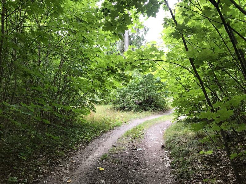 Paisaje pintoresco del verano El camino de tierra en las roderas del bosque dos entra la distancia a través del bosque alrededor  foto de archivo