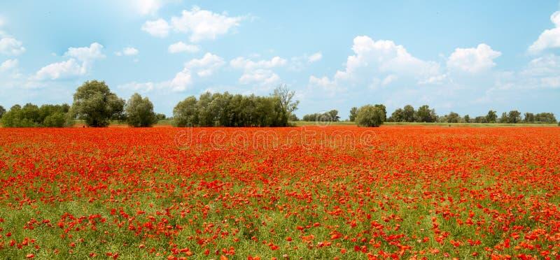 Paisaje polaco, amapolas en el campo, panorama fotos de archivo