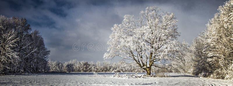 Paisaje prístino panorámico del invierno fotos de archivo
