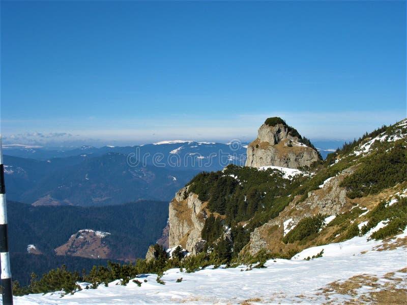 Paisaje que sorprende de los Cárpatos rumanos en invierno fotos de archivo libres de regalías