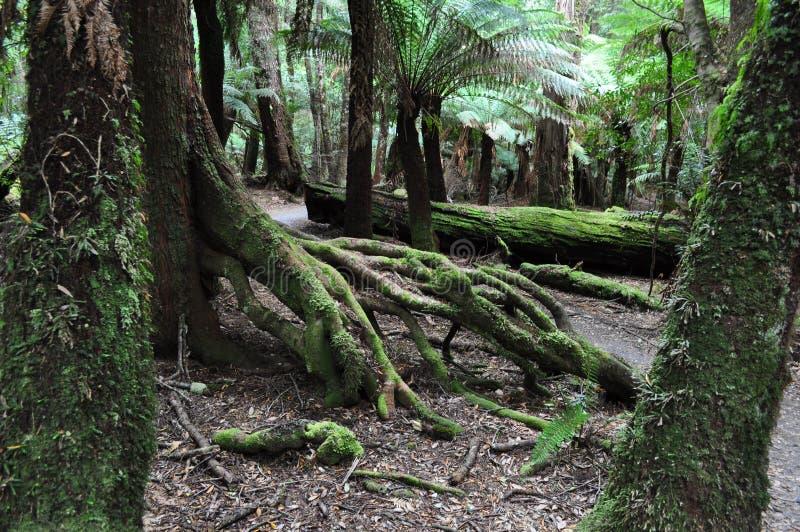 Paisaje que sorprende en el arco de Trowutta, Tasmania en Australia fotografía de archivo libre de regalías