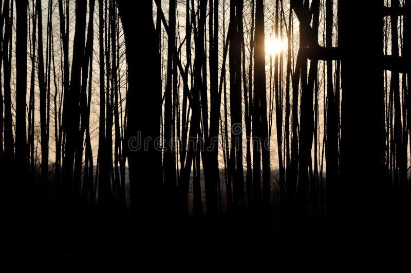 Paisaje que sorprende - siluetas de árboles en la sombra Rayos de Sun detrás de ellos Naturaleza hermosa foto de archivo libre de regalías
