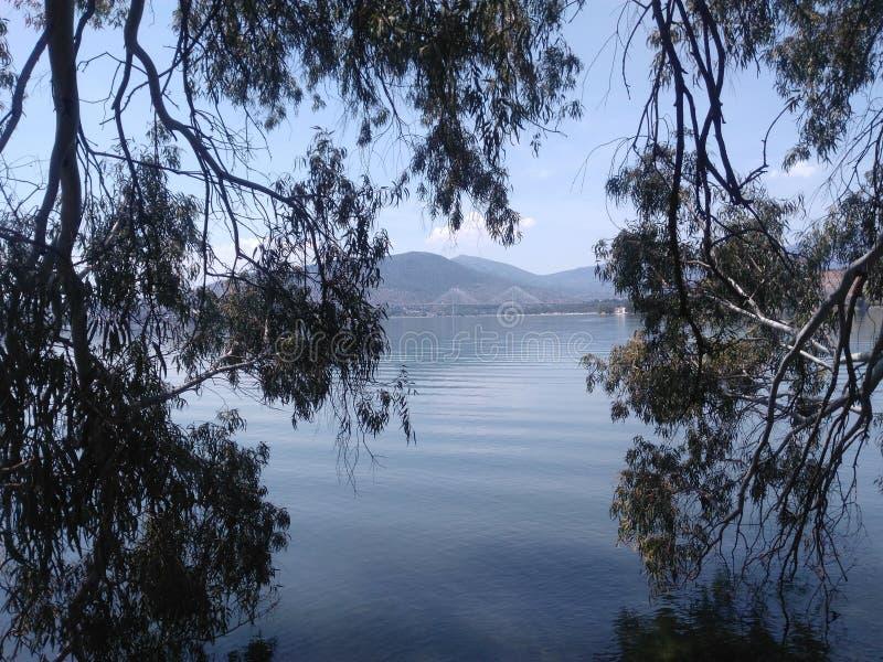 Paisaje Ramas de árbol en el primero plano En el mar y las montañas traseros imagenes de archivo