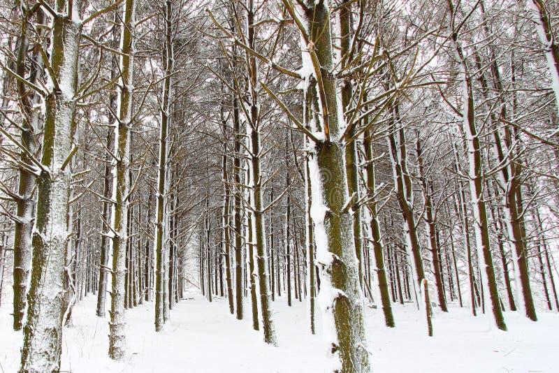 Paisaje recientemente caido Illinois de la nieve fotografía de archivo