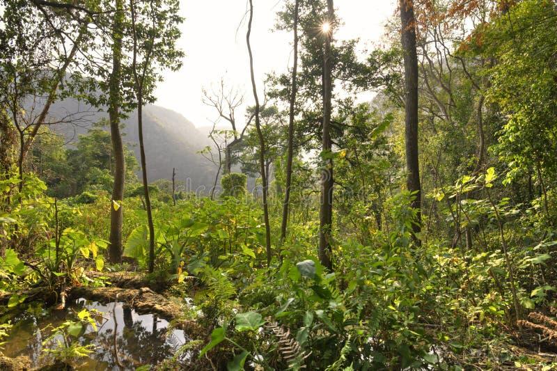 Paisaje rugoso illuminating en Chiapas, M de la selva del sol de la tarde imagenes de archivo