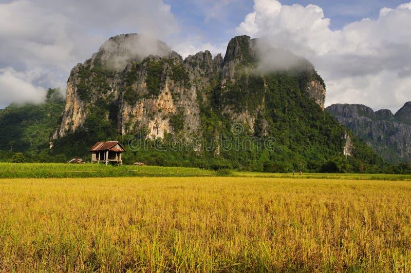 Download Paisaje rural imagen de archivo. Imagen de choza, arroz - 7282639