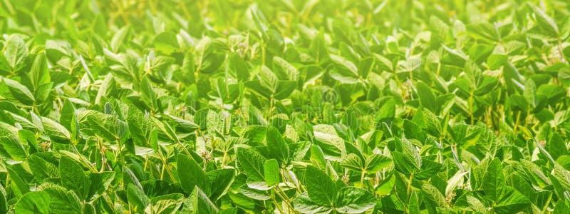 Paisaje rural - campo la glicocola de la soja m?xima fotografía de archivo libre de regalías