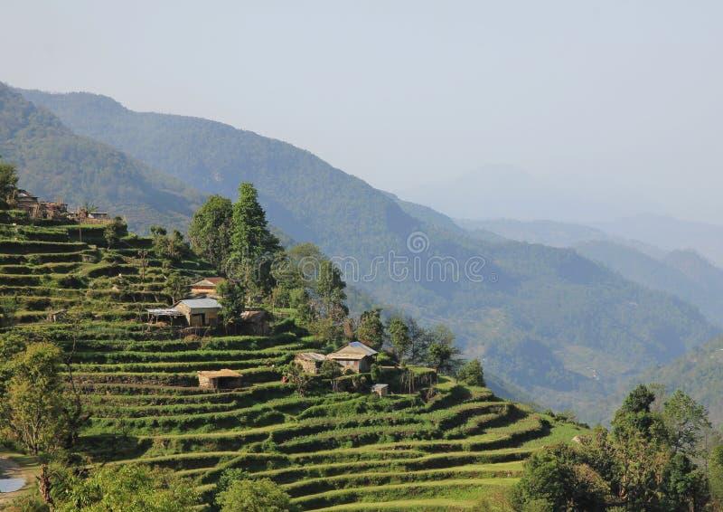 Paisaje rural cerca de Landruk, Nepal Configuración tradicional imagen de archivo