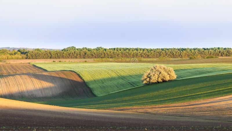 Paisaje rural con el campo de la primavera fotografía de archivo