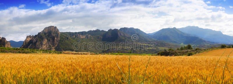 Download Paisaje Rural Con El Campo De Trigo Foto de archivo - Imagen de verano, rural: 42433618