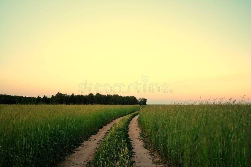 Paisaje rural con el campo de trigo en puesta del sol imagenes de archivo