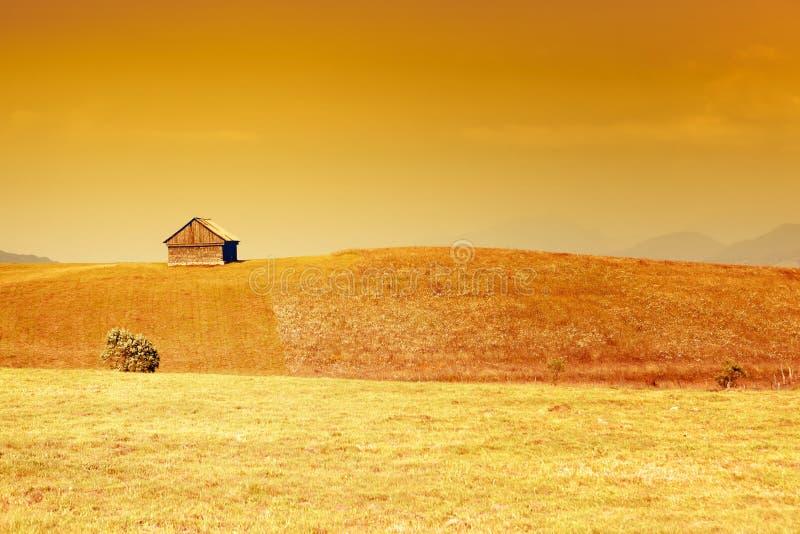 Paisaje rural con el cielo y la hierba de oro foto de archivo