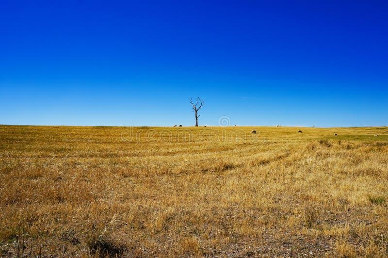 Paisaje rural con la hierba seca y la silueta del árbol muerto imagenes de archivo