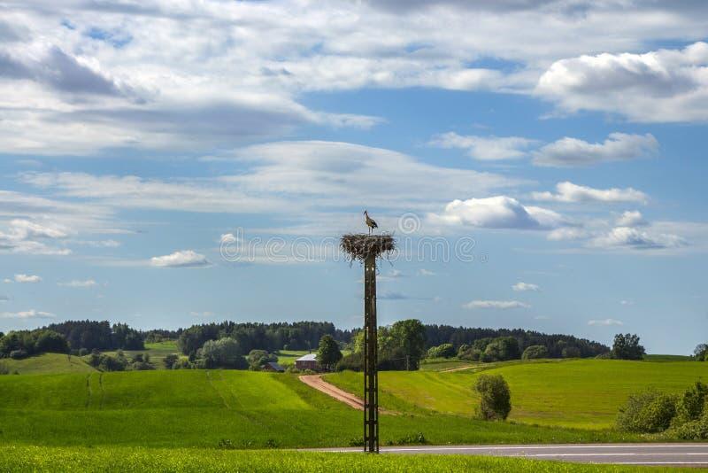 Paisaje rural con la jerarquía de la cigüeña en el día de verano fotografía de archivo libre de regalías