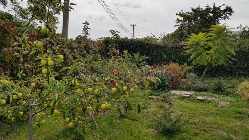 Paisaje rural con la pequeña huerta de los árboles frutales y el césped de la hierba verde Patio trasero con los manzanos Muchas  fotografía de archivo libre de regalías