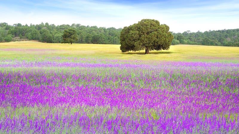 Paisaje rural de la naturaleza pintoresca con los campos fotografía de archivo libre de regalías