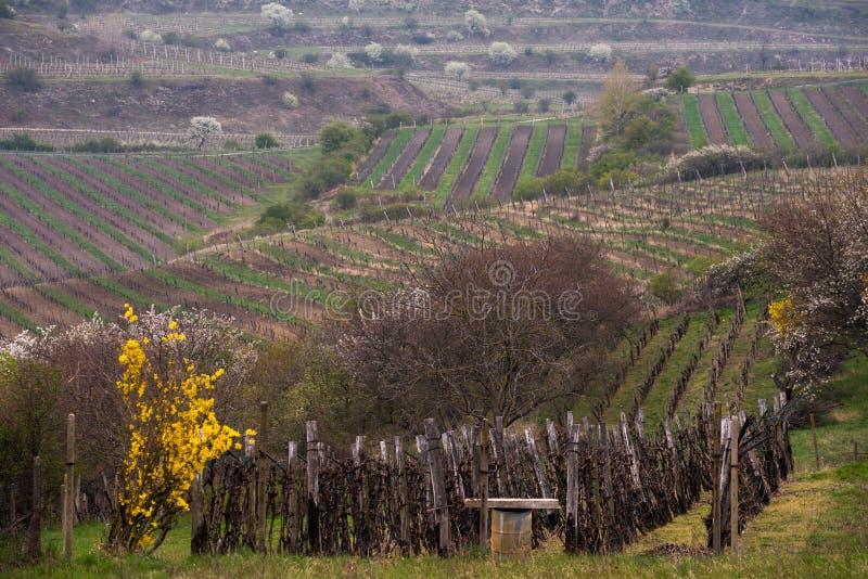 Paisaje rural de Moravian fotos de archivo