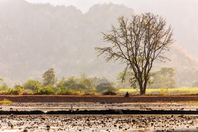 Paisaje rural de Tailandia fotos de archivo