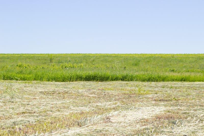 Paisaje rural del pueblo horizontal rústico hermoso, hierba segada en campo con la hierba verde contra prado del verano del cielo fotografía de archivo libre de regalías