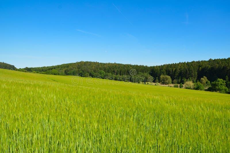 Paisaje rural del verano con el campo y el bosque en horizonte fotos de archivo libres de regalías
