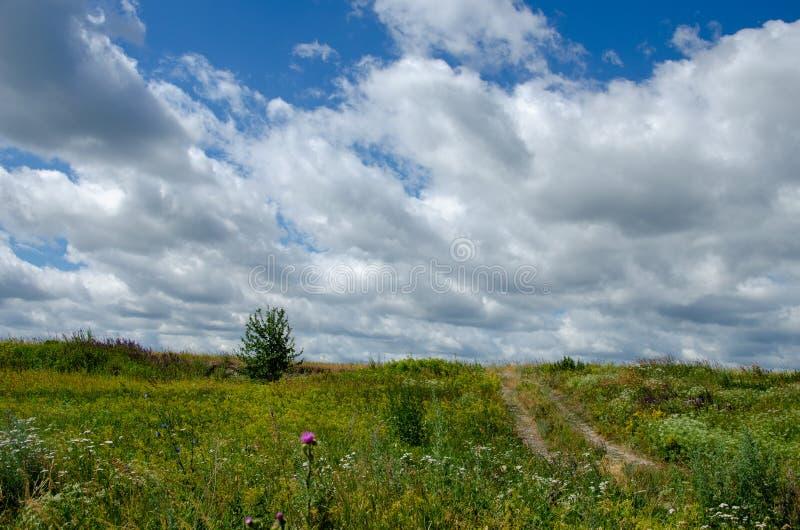 Paisaje rural del verano con un prado, un camino y nubes florecientes fotografía de archivo libre de regalías