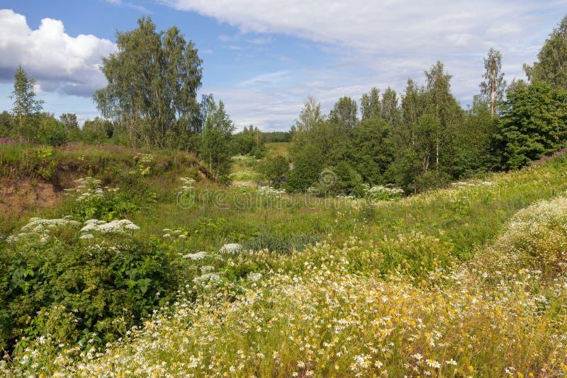 Paisaje rural del verano verde fotos de archivo