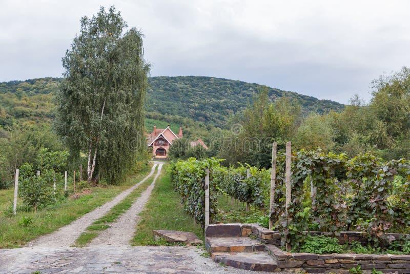 Paisaje rural en la ciudad de Vynohradiv, Ucrania foto de archivo