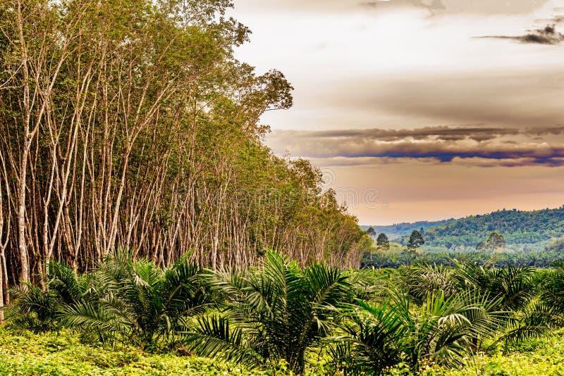 Paisaje rural en Tailandia meridional fotografía de archivo