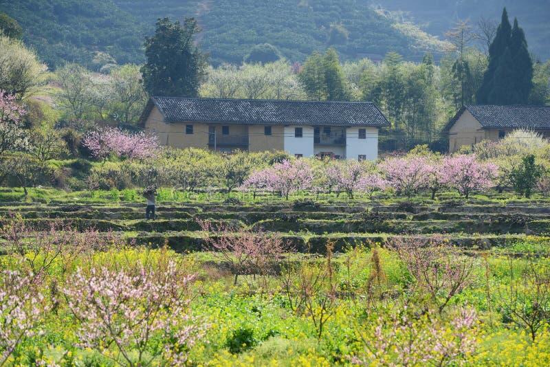 Paisaje rural, flor del melocotón en área moutainous imágenes de archivo libres de regalías