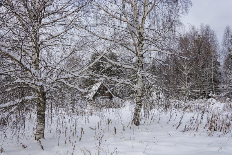 Paisaje rural hermoso en un día nublado del invierno escarchado imágenes de archivo libres de regalías