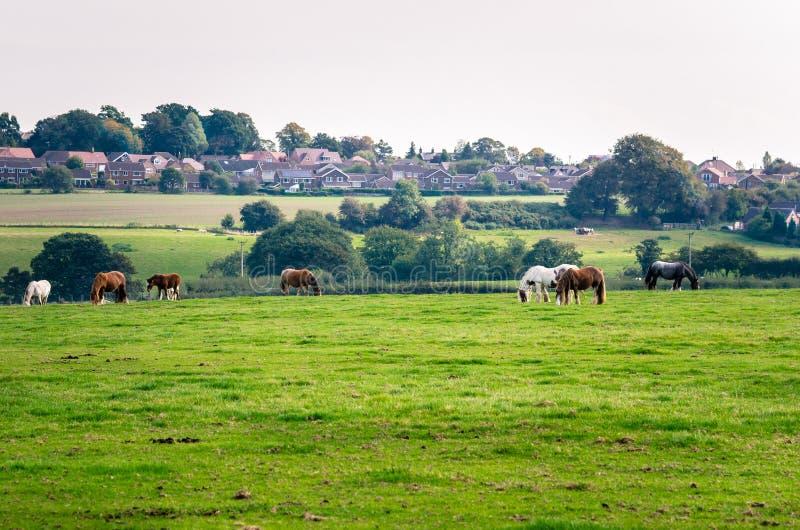 Paisaje rural idílico en Inglaterra foto de archivo