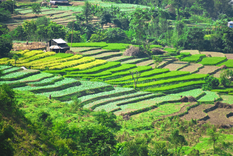 Paisaje rural la India foto de archivo