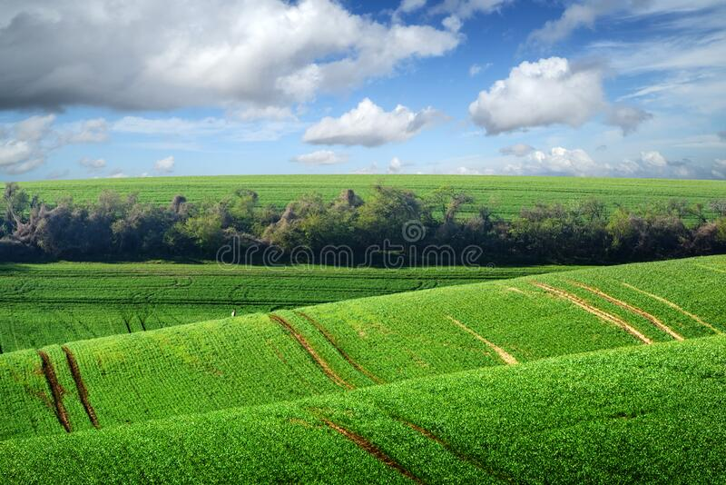 Paisaje rural pintoresco con campo verde y árbol fotos de archivo