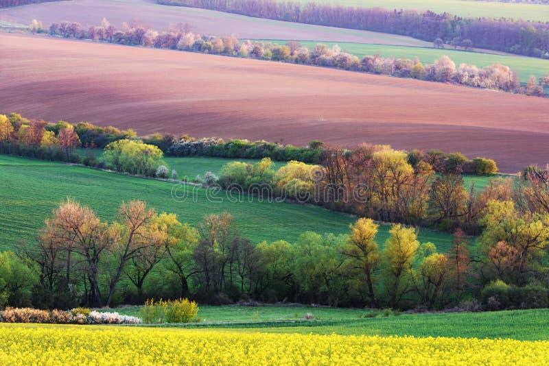 Paisaje rural pintoresco con campo verde y árbol imagen de archivo libre de regalías