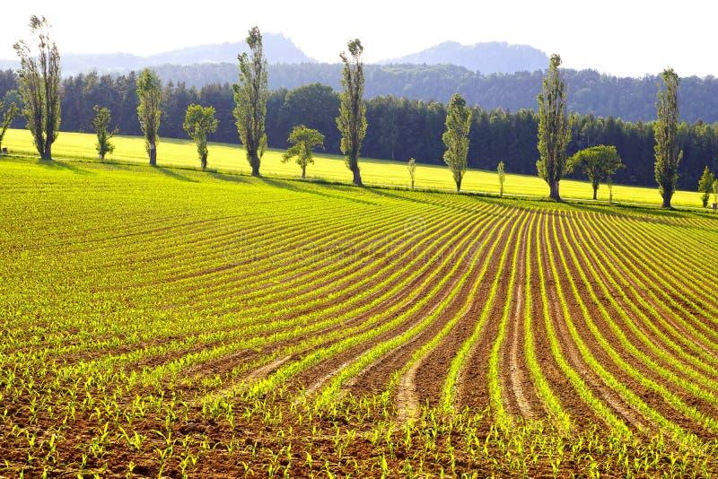Paisaje rural pintoresco con la plantación. fotos de archivo