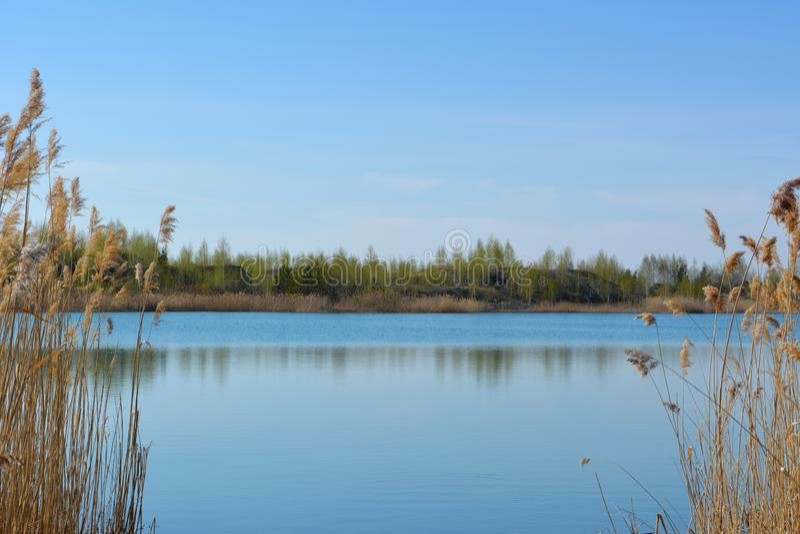 Paisaje ruso pintoresco Vista del lago con agua azul clara entre los matorrales de cañas secas imágenes de archivo libres de regalías