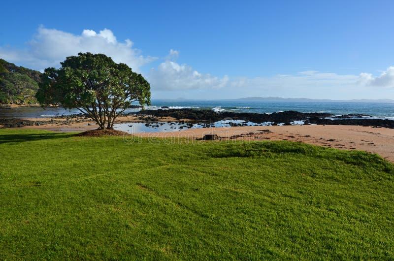 Download Paisaje Salvaje De La Bahía NZL Del Cable Imagen de archivo - Imagen de claro, turismo: 42431319