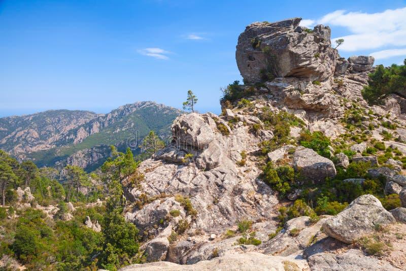 Paisaje salvaje de la montaña con los pequeños árboles de pino imágenes de archivo libres de regalías