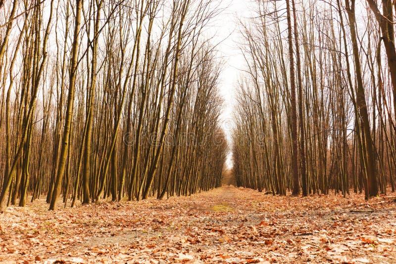 Paisaje salvaje del árbol cerca de Ostrava, República Checa fotos de archivo