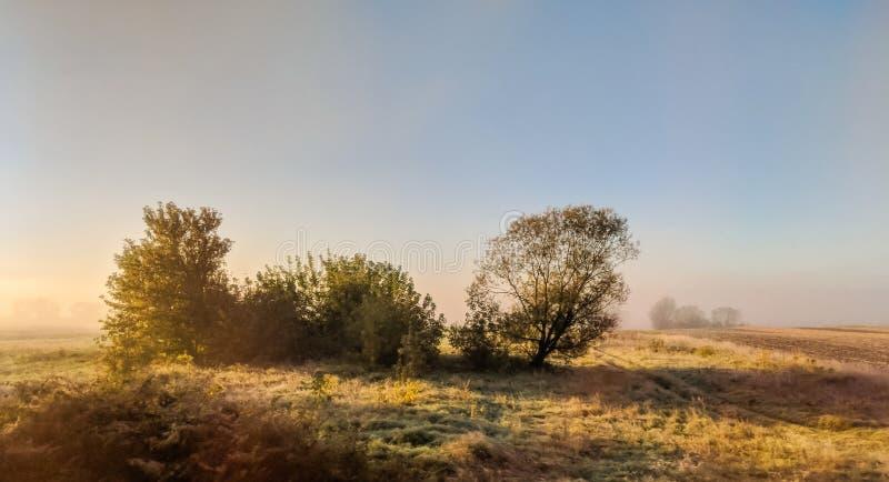 Paisaje salvaje del campo de la naturaleza con niebla por la mañana imagen de archivo libre de regalías