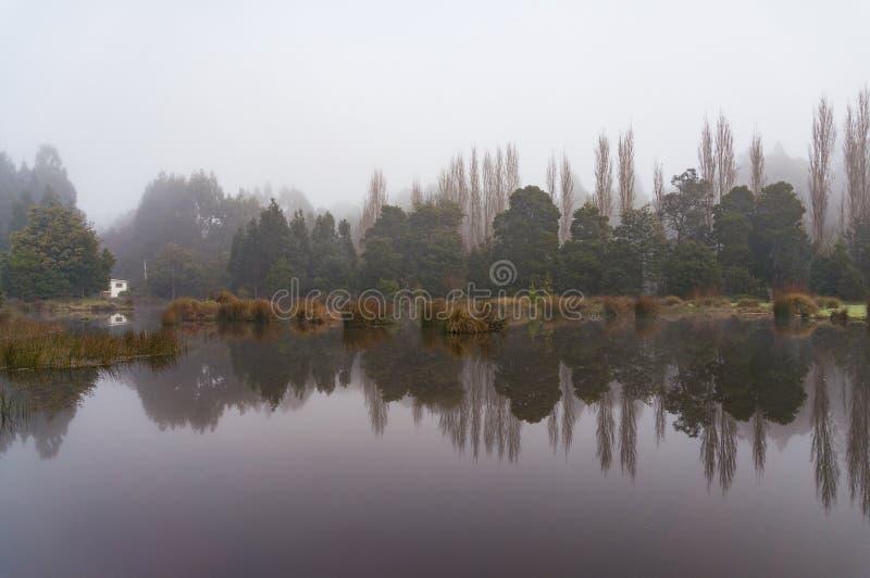 Paisaje sereno del lago del bosque fotos de archivo