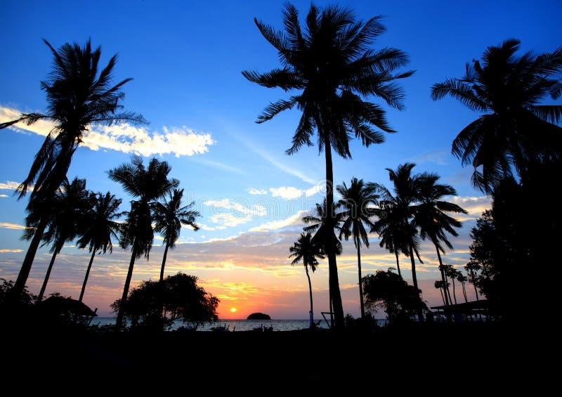 Paisaje silueteado del árbol de coco durante puesta del sol, Tailandia foto de archivo libre de regalías