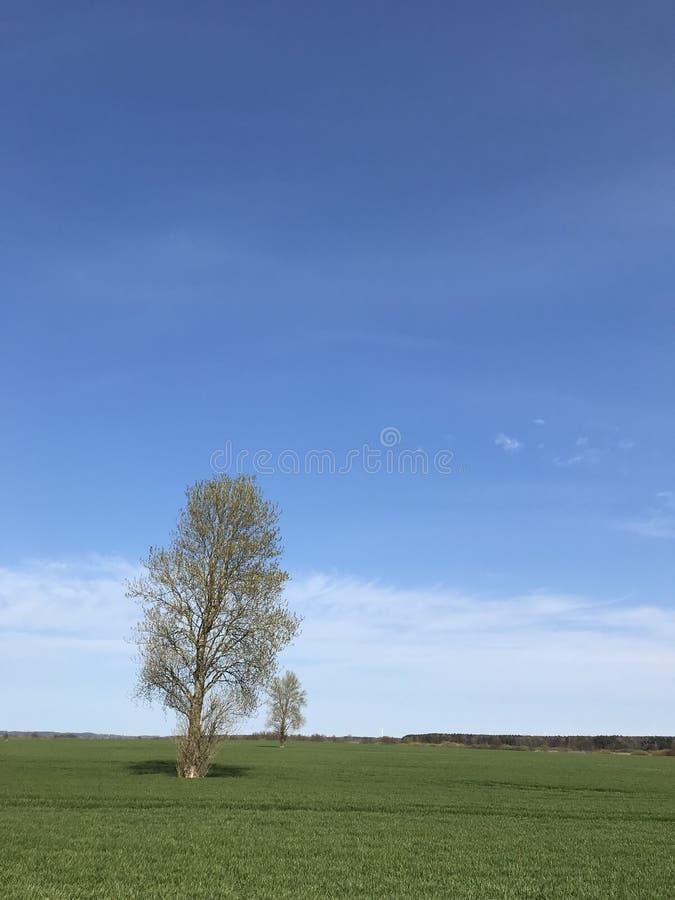 Paisaje simple con dos ?rboles, el campo verde y el cielo azul fotos de archivo libres de regalías