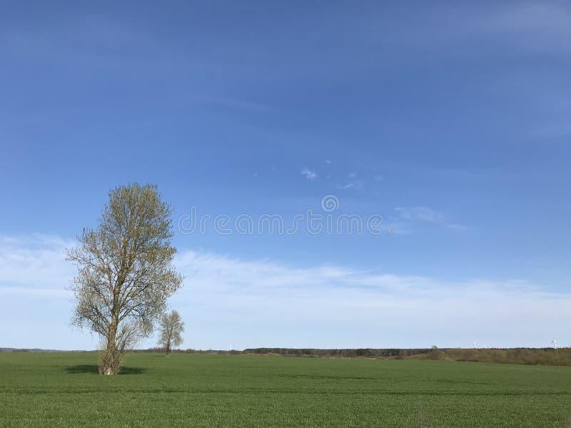Paisaje simple con dos ?rboles, el campo verde y el cielo azul foto de archivo