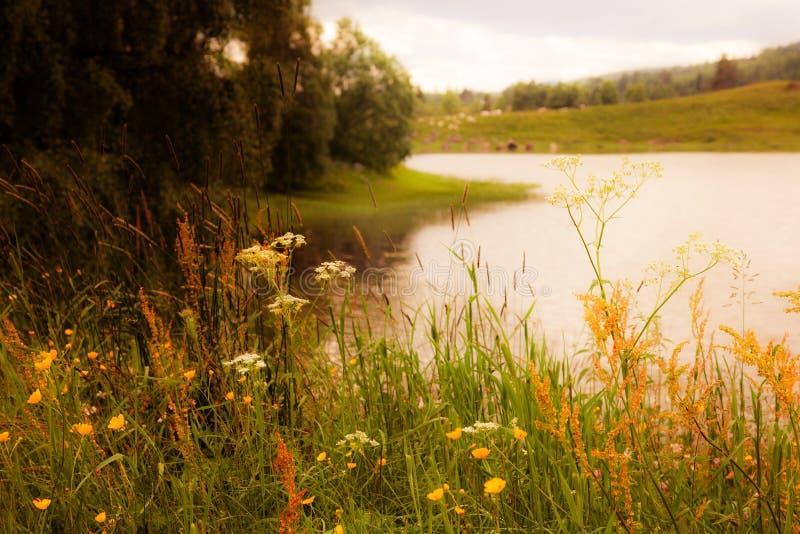 Paisaje soñador en Suecia. Imagen conceptual de la textura. imagenes de archivo