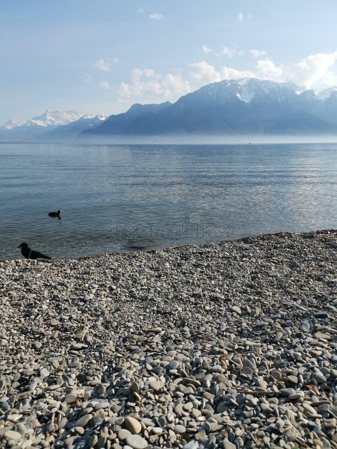 Paisaje sobre el lago Lemán y las abolladuras du Midi con un cuervo y un pato como tierra de en medio imagen de archivo libre de regalías