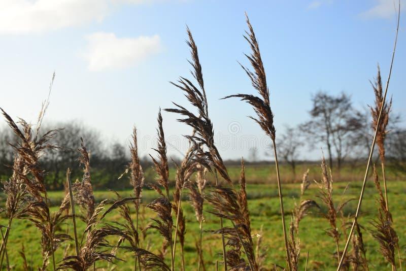 Paisaje sobre el río y la carretera al atardecer en la zona agrícola plana de la provincia de Groningen, Países Bajos imagen de archivo libre de regalías