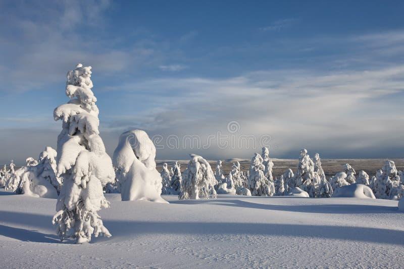 Paisaje soleado del invierno en Laponia imagenes de archivo